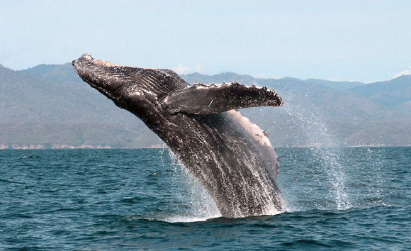 SantaMadre-whale-01